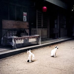 RWOLFE_JAPAN_BOOK_WEB-49_o